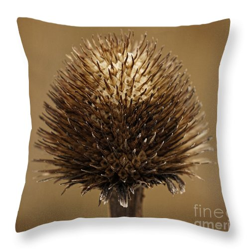 Dry Throw Pillow featuring the photograph Winter Thistle by Inge Riis McDonald