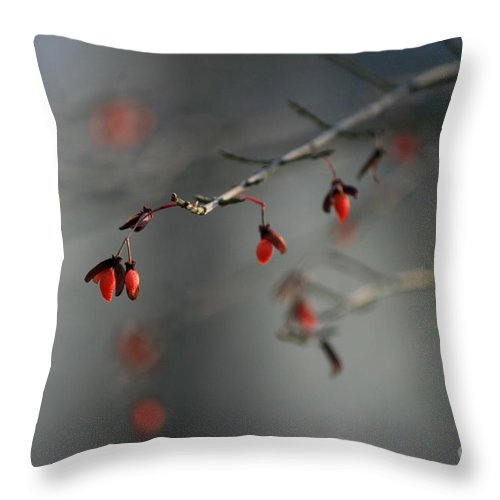 Red Flower Throw Pillow featuring the photograph Winter Vibrance by Neal Eslinger