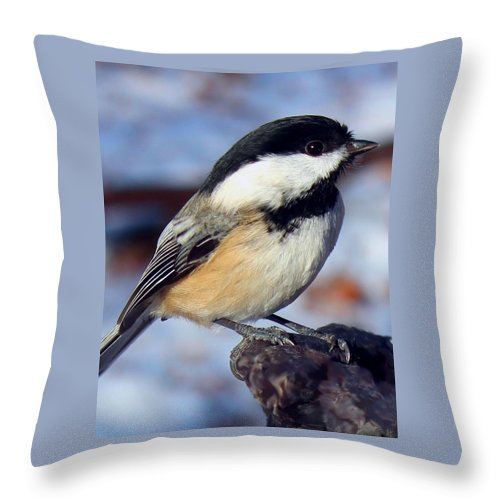 Winter Throw Pillow featuring the photograph Winter Visitor by Gigi Dequanne