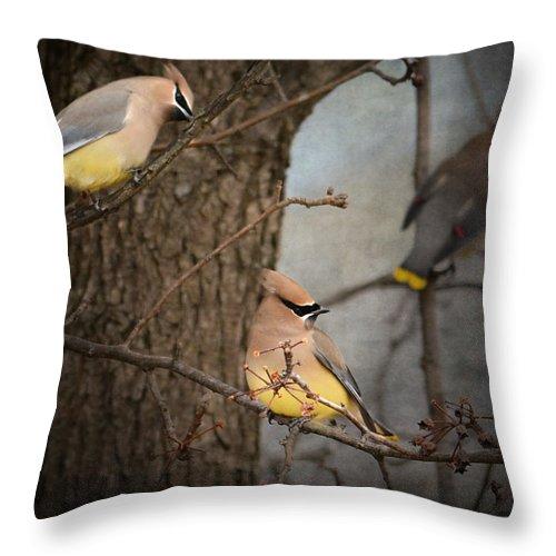Cedar Waxwing Art Throw Pillow featuring the photograph Winter Visitors by Jai Johnson