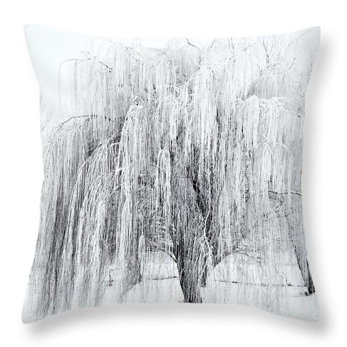 Willow Throw Pillow featuring the photograph Winter Willow by Mike Dawson