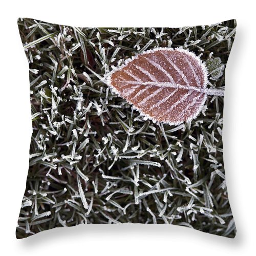Apart Throw Pillow featuring the photograph Winter With Frosted Leaf On Frozen Grass by Jim Corwin