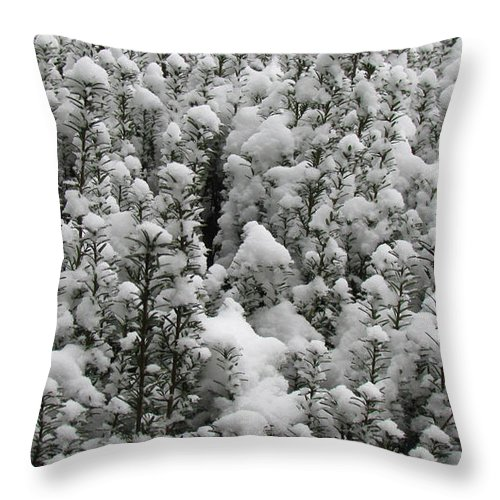 Background Throw Pillow featuring the photograph Winter Wonderland by Jeelan Clark