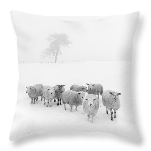Sheep In Winter Throw Pillow featuring the photograph Winter Woollies by Janet Burdon