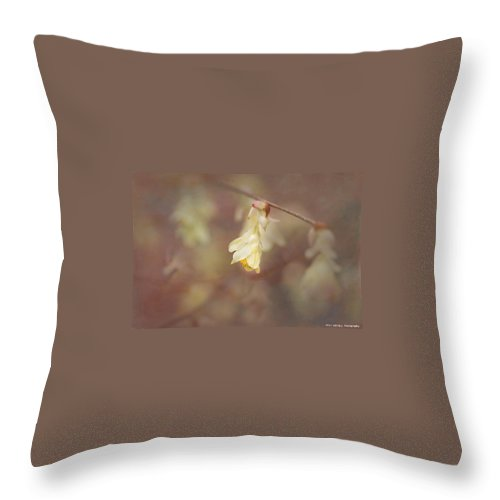Winterhazel Throw Pillow featuring the photograph Winterhazel by Fran Gallogly