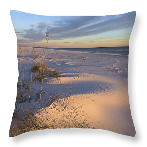 Fl Throw Pillow featuring the photograph Winter's Day by Bill Chambers