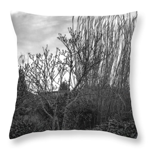 Throw Pillow featuring the photograph Winters Garden by Cathy Anderson