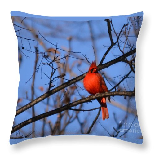 Cardinal Throw Pillow featuring the photograph Winter's Red Beauty 5 by Barb Dalton