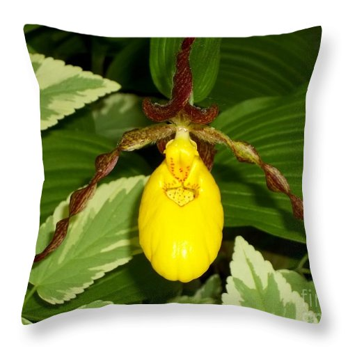 Wisconsin Yellow Lady Slipper Throw Pillow featuring the photograph Wisconsin Yellow Lady Slipper by Deb Schense