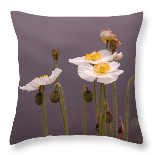 White Throw Pillow featuring the photograph Wispy White Floral by Suzanne Gaff