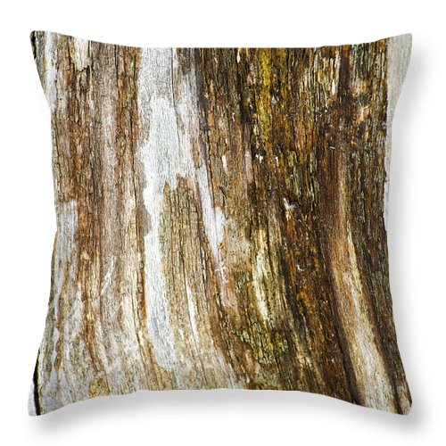 Abstract Throw Pillow featuring the photograph Wood Abstract by Elaine Mikkelstrup