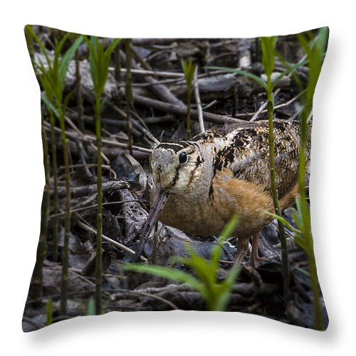 Animal Throw Pillow featuring the photograph Wood Cock by Jack R Perry