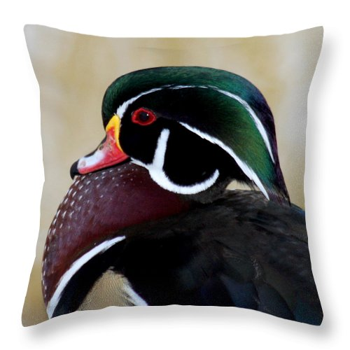 Wood Duck Throw Pillow featuring the photograph Wood Duck 1 by Bob and Jan Shriner