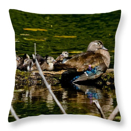 Wood Ducks Throw Pillow featuring the photograph Wood Duck Rest Time by Cheryl Baxter