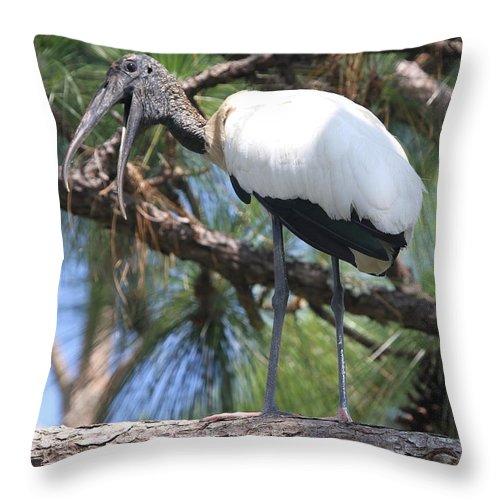 Stork Throw Pillow featuring the photograph Wood Stork by Ken Keener