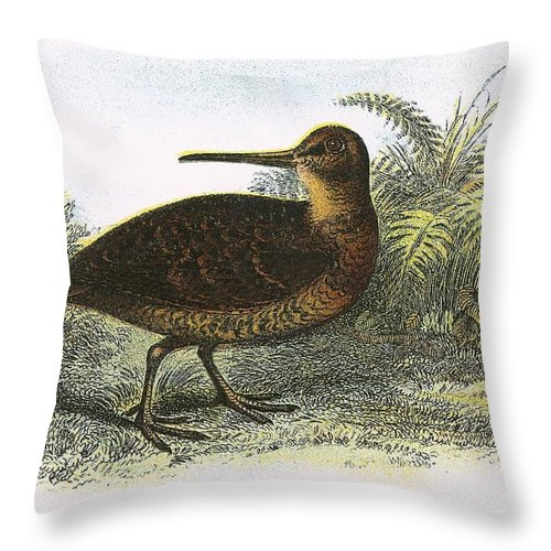 British Birds Throw Pillow featuring the photograph Woodcock by English School
