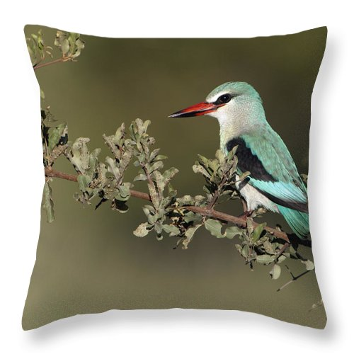 Nis Throw Pillow featuring the photograph Woodland Kingfisher Kruger Np South by Alexander Koenders