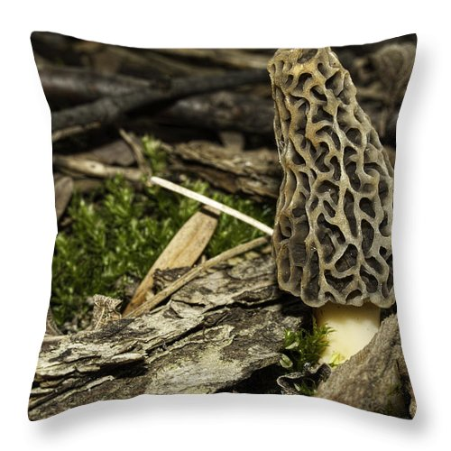 Morel Mushroom Throw Pillow featuring the photograph Woodland Yummy by Thomas Young