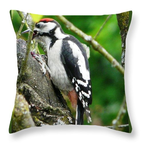 Bird Throw Pillow featuring the photograph Woodpecker Swallowing A Cherry by Valerie Ornstein