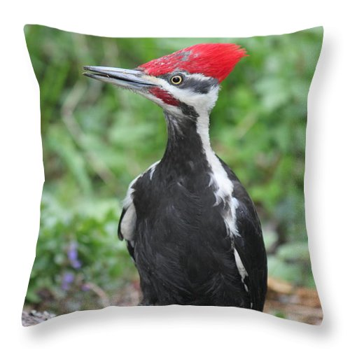 Woodpecker Throw Pillow featuring the photograph Woody by Ruth Kamenev