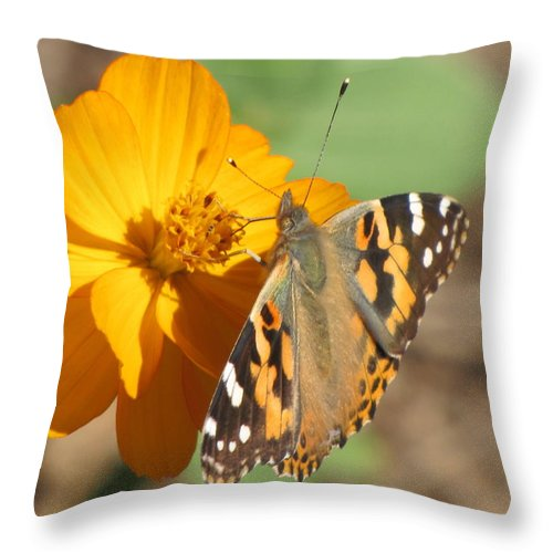 Butterfly Throw Pillow featuring the photograph Working Together by Karen Beasley