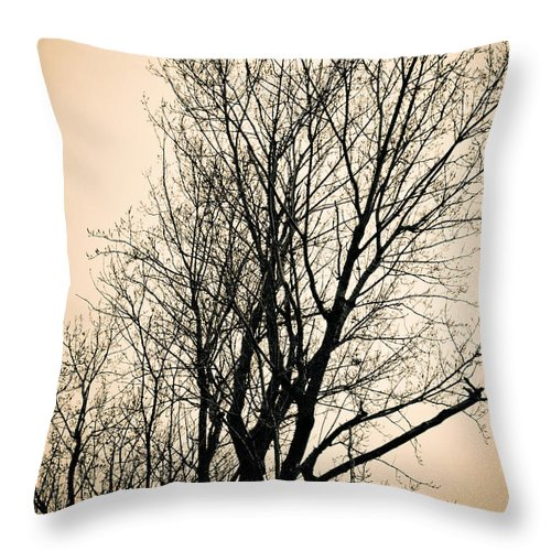 Sillhouetted Throw Pillow featuring the photograph Woven Wonder by Maggy Marsh