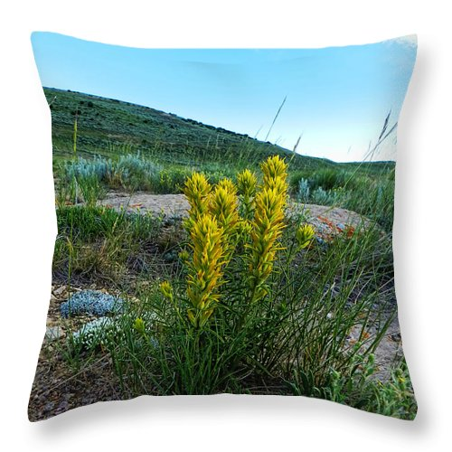 Throw Pillow featuring the photograph Wyoming Wildflowers Indian Paintflowers by Cathy Anderson