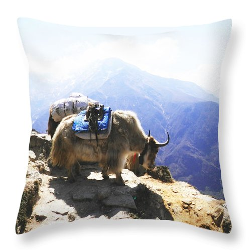 Yak Throw Pillow featuring the photograph Yaks 1 by Pema Hou