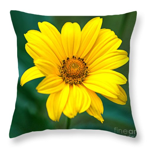 Maine Nature Photographers Throw Pillow featuring the photograph Yellow Beauty by Alana Ranney