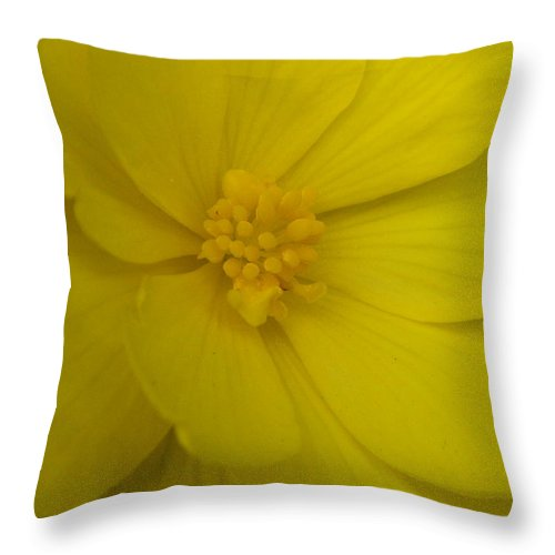 Yellow Throw Pillow featuring the photograph Yellow Begonia by Nicki Bennett