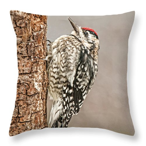 Yellow Bellied Sapsucker Throw Pillow featuring the photograph Yellow Bellied Sapsucker by Lara Ellis