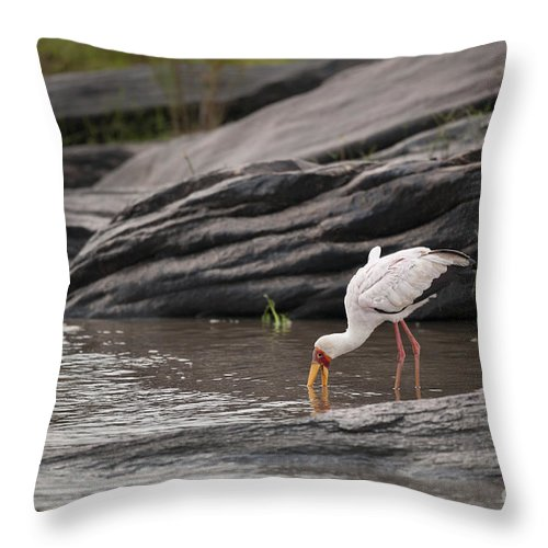 Africa Throw Pillow featuring the photograph Yellow-billed Stork Fishing In River by John Shaw