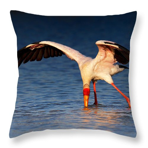 Yellow-billed Throw Pillow featuring the photograph Yellow-billed Stork Hunting For Food by Johan Swanepoel