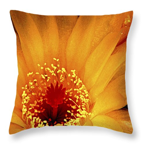 Cactus Throw Pillow featuring the photograph Yellow Cactus Flower by Paul W Faust - Impressions of Light
