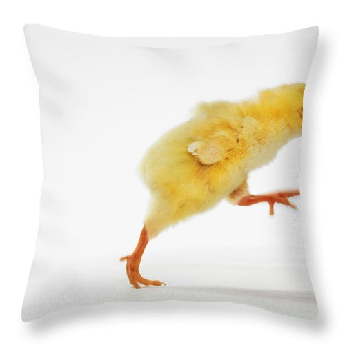 Active Throw Pillow featuring the photograph Yellow Chick. Baby Chicken by Thomas Kitchin & Victoria Hurst