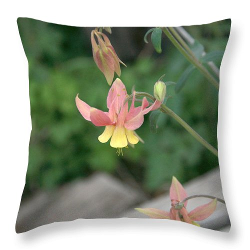 Yellow Throw Pillow featuring the photograph Yellow Columbine 2 by Frank Madia