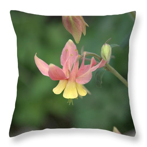 Flower Throw Pillow featuring the photograph Yellow Columbine by Frank Madia