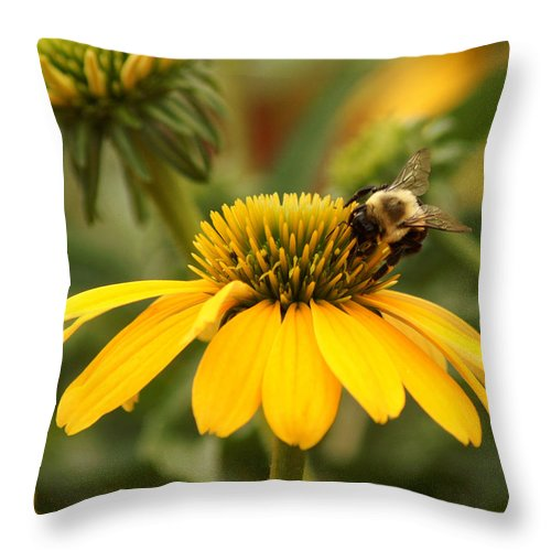 Coneflower Throw Pillow featuring the photograph Yellow Coneflower And Bee by TnBackroadsPhotos