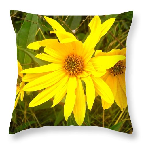 Flowers Throw Pillow featuring the photograph Yellow Daisies by Stephanie Moore