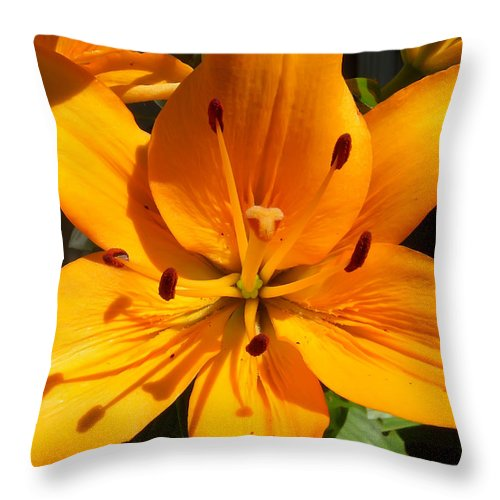 Flower Throw Pillow featuring the photograph Yellow Delight by Aimee L Maher ALM GALLERY