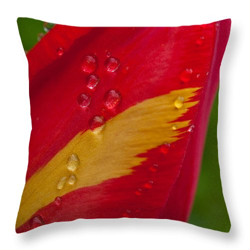 Tulip Throw Pillow featuring the photograph Yellow Flame by Sabine Edrissi