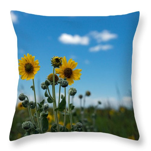 Yellow Throw Pillow featuring the photograph Yellow Flower On Blue Sky by Photographic Arts And Design Studio