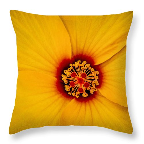 Yellow Hibiscus Throw Pillow featuring the photograph Yellow Hibiscus by TK Goforth