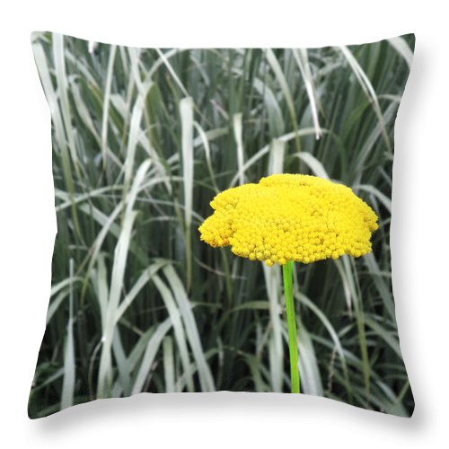 Yellow Throw Pillow featuring the photograph Yellow Immortelle Flower by Alla Albert