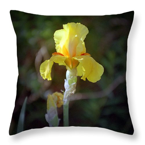 Iris Throw Pillow featuring the photograph Yellow Iris by Kathy McClure