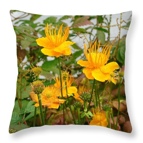 Flower Throw Pillow featuring the photograph Yellow Is Golden by Lew Davis