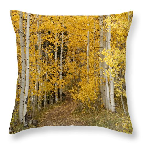 Yellow Leaf Road Throw Pillow featuring the photograph Yellow Leaf Road by Ernie Echols