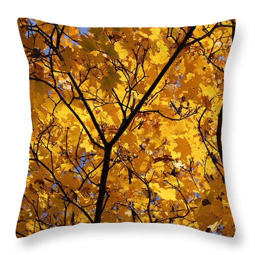 Maple Throw Pillow featuring the photograph Yellow Maple 3 by Mary Bedy