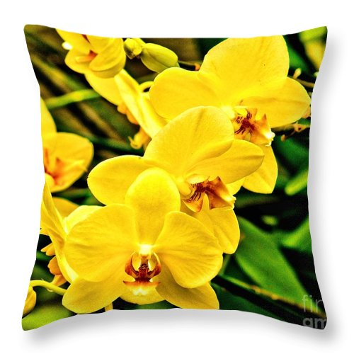 Yellow Throw Pillow featuring the photograph Yellow Orchids by Nick Zelinsky