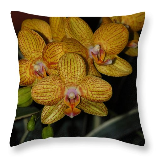 Yellow Orchid Throw Pillow featuring the photograph Yellow Orchids by Suzanne Gaff